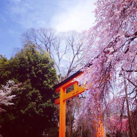 Hirano Shrine: Red Torii Gate at Hirano jinja.