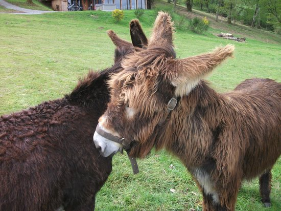 Le Clos des Chenaies : ânes
