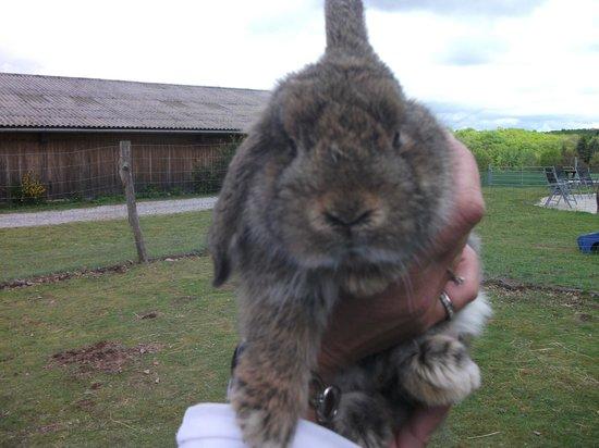 Le Clos des Chenaies : lapin belier