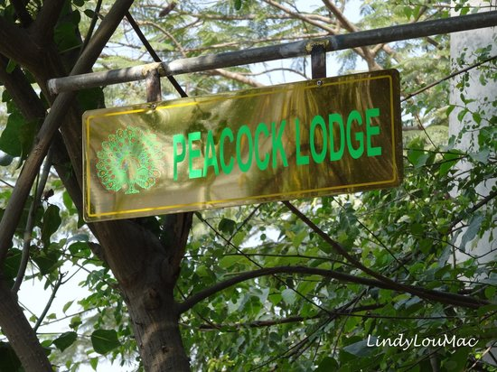 Peacock Lodge: Sign