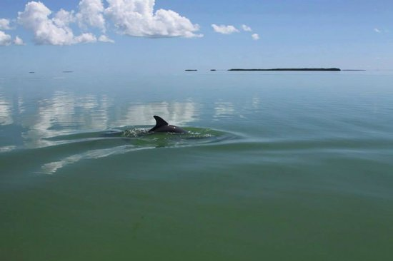 South Florida Fishing LLC: Dolphins love to come say hello!