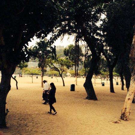 Deep Water Bay : Gli alberi che fanno ombra