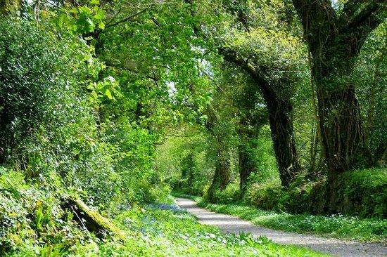 Buckland Abbey: Blue Estate Walk