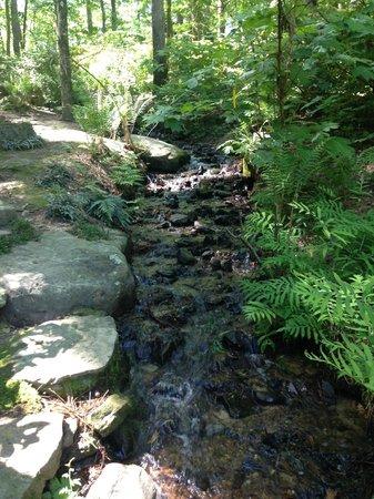 Garvan Woodland Gardens: Stream