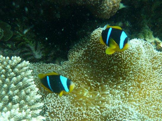 Ocean Village Club: plongee