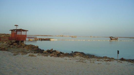 The Turtle Beach Resort (Ras al Hadd) : private beach