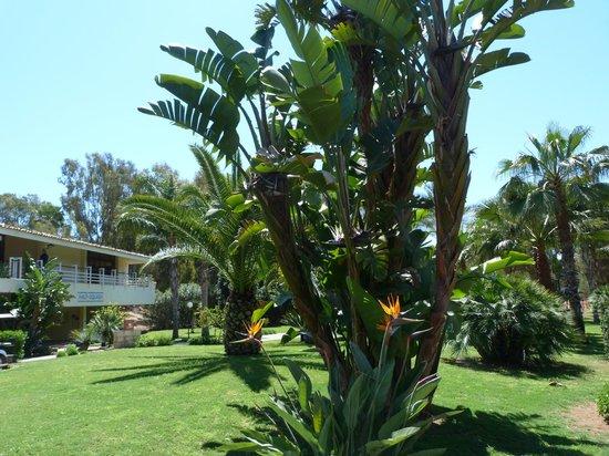 Club Med Kamarina : Jardin