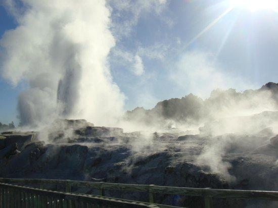 Te Puia: geyser & thermal pools