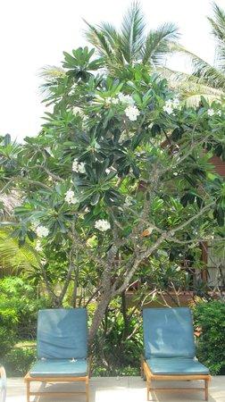 Green Papaya Resort: the pool 2