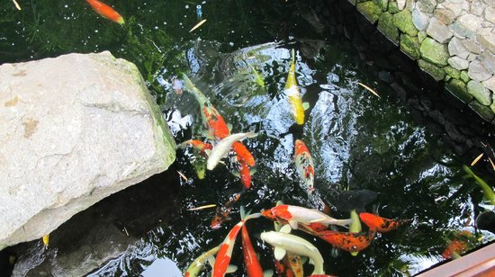 Green Papaya Resort: the fishes