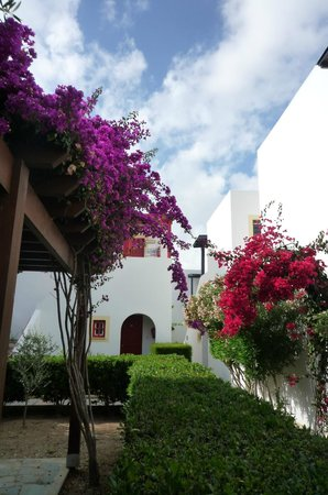 Kefalos Beach Tourist Village: Flowers in the village pathways