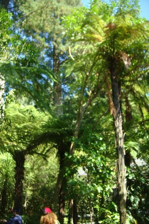 Rainbow Springs Nature Park : fern forest