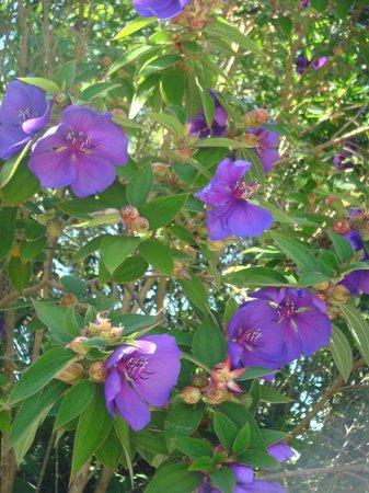 Rainbow Springs Nature Park : glory tree