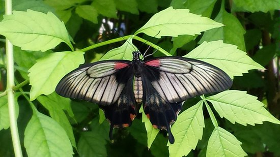 Buckfast Butterfly Farm and Dartmoor Otter Sanctuary: Beautiful butterfly