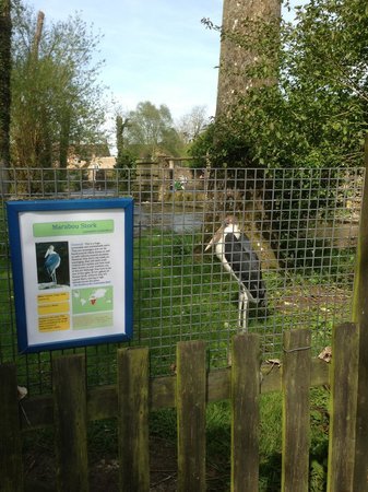 Birdland: Stork