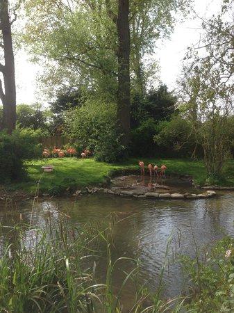 Birdland: Orange flamingos