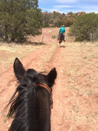 Xanadu Ranch GetAway / Private Guest Rooms / Guest Ranch & Horse Motel: Hey, Domino!  Wait for me!