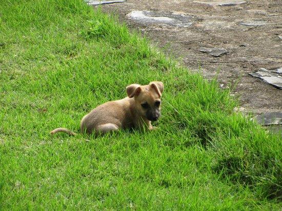 Chalet Tropical Village: Simba