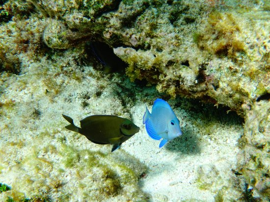 Starfish Jolly Beach Resort : Excursion petit bateau barrière corail