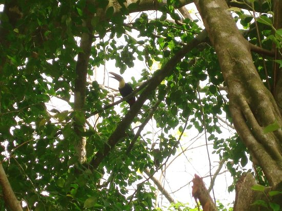La Pina Lodge B&B: Special for the toucans