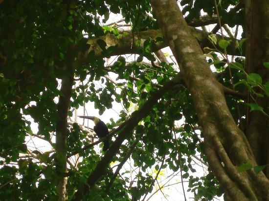La Pina Lodge B&B: The toucans place