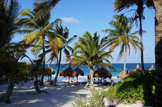 La Zebra Colibri Boutique Hotel : Blick aus der Cabana