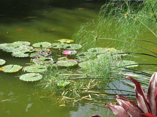 Jolies picture of jardin botanique de deshaies deshaies for Jardin botanique deshaies