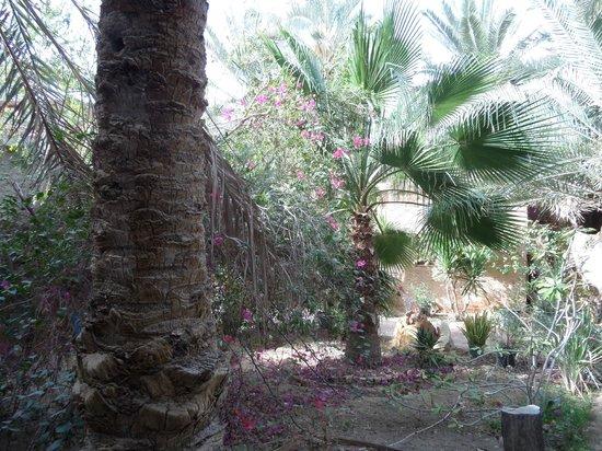 Siwa Paradise: The Gradens