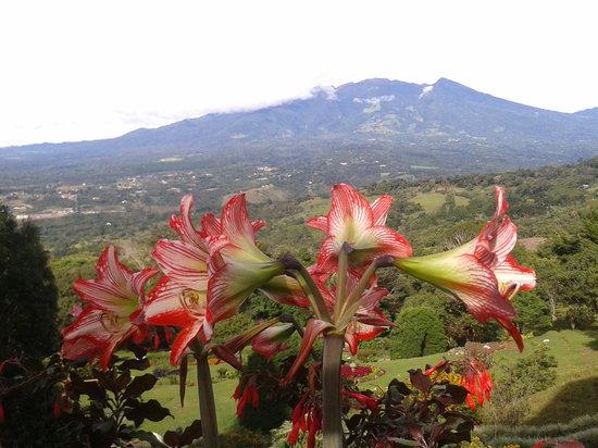 Cabanas El Parador : Vista del Volcán Barú