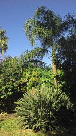Art Hotel Deco: Jardin