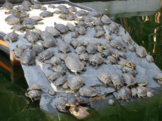 Estación de Atocha: Turtles turtles turtles.