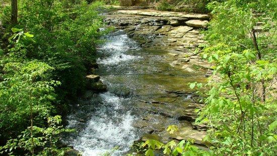 Radcliff, KY : Saunders Springs Nature Preserve