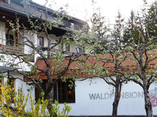 Ferienpark Waldpension Putz: Blick aus dem Fenster