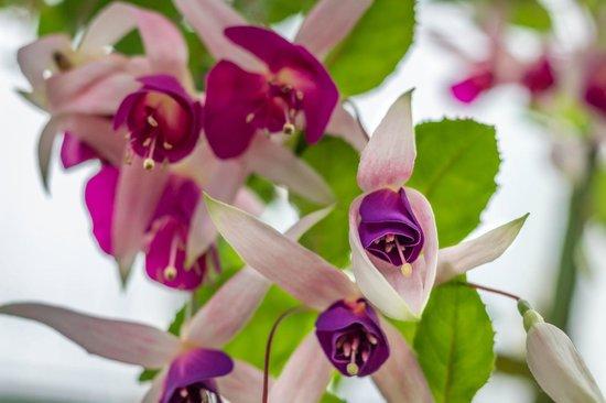 Serres Royales De Laeken  Des fleurs magnifiques
