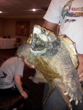 John Carver Inn & Spa: This was the giant prehistoric snapping turtle. Like a real life Koopa. We loved this guy!