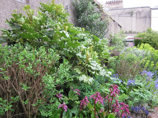 The Old Priory Bed and Breakfast: The Old Priory garden