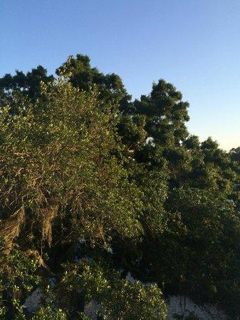 Sawgrass Marriott Golf Resort & Spa: View from my room window