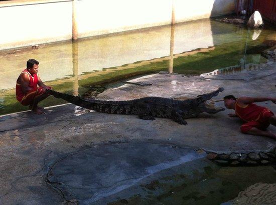 Samutprakan Crocodile Farm and Zoo : après la main, la tête !