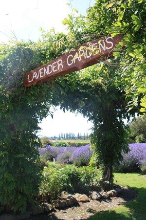 Lavendyl Lavender Farm : Entry