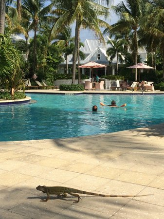 Tranquility Bay Beach House Resort : visitor at pool area