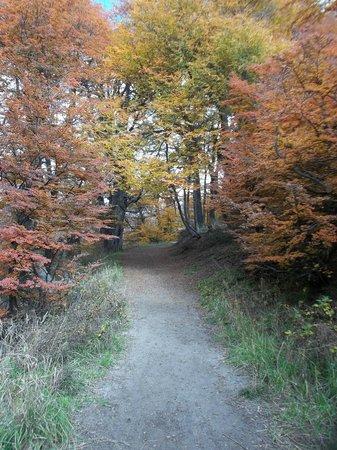 Cerro Otto: Bosque