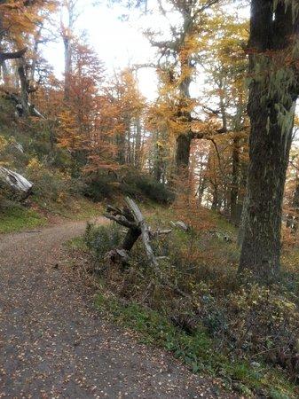 Cerro Otto: caminata por el bosque