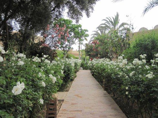 Hotel Dar Zitoune: Les délices sont au bout de l'allée de roses