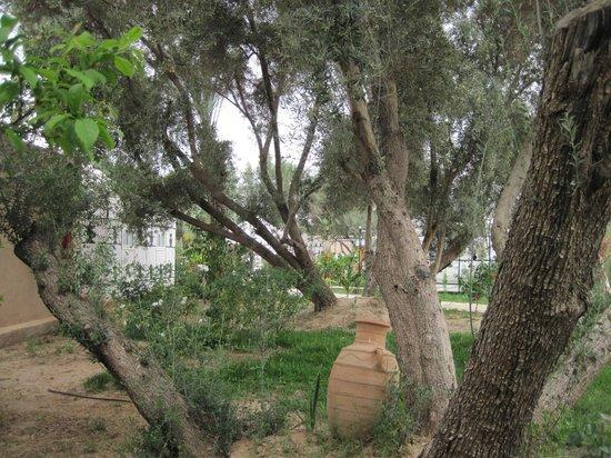 Hotel Dar Zitoune: Aménagement entre les maisons