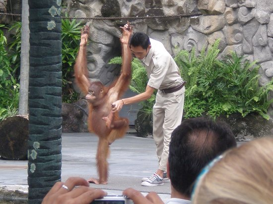 Bali Zoo : 動物ショー
