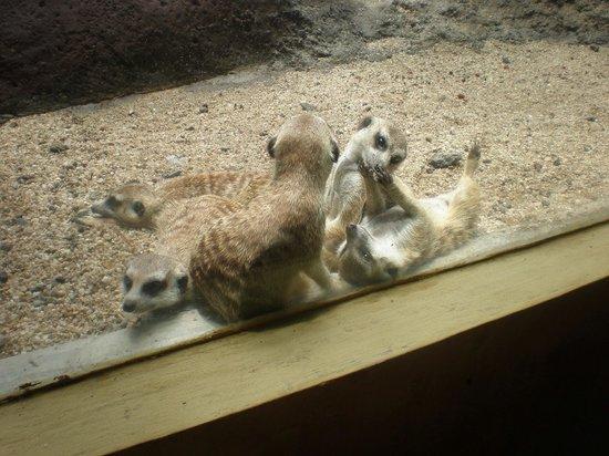 Bali Zoo : 可愛いプレーリードッグ