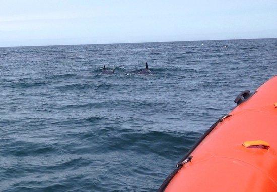 North 58 Sea Adventures: Dolphins