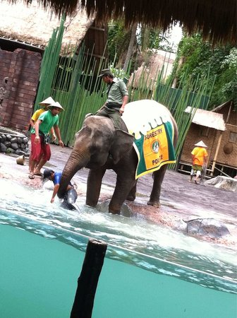 Bali Zoo : エレファントショー。素晴らしかったです! 見ているだけでストーリーもわかるし笑えるし面白かった!