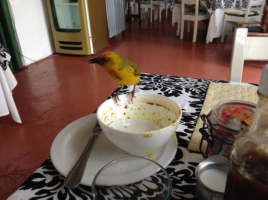 Geelbek: Cape Weaver joins me for lunch!