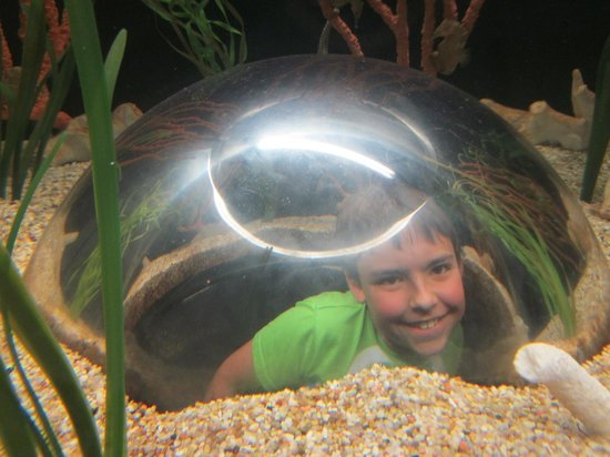 Texas State Aquarium : Hi Mr Turtle